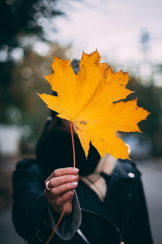 Фото с листьями